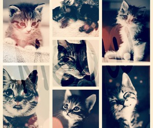 <3, cat, and sweet image