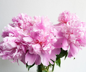 flowers, pink, and pretty image