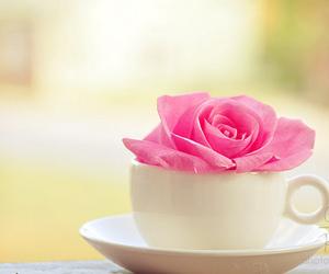 beauty, morning, and cup image