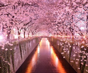 pink, japan, and flowers image