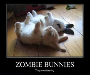 funny, bunny, and rabbit image