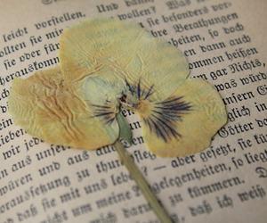 flower and vintage image