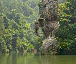 elephant, nature, and india image