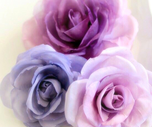 rose, flowers, and romantic image