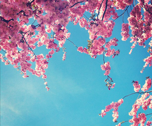 flowers and cherry blossom image