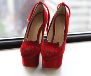 shoes, red, and cat image