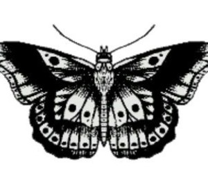 Harry Styles, tattoo, and butterfly image