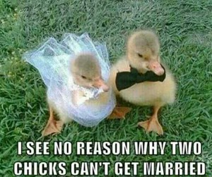 animals, chicks, and funny pictures image