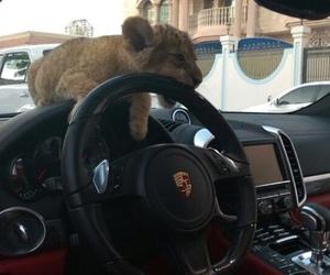 car, animal, and luxury image