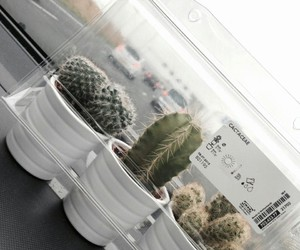 cactus, hipster, and philosophy image
