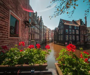 amsterdam, colors, and Houses image