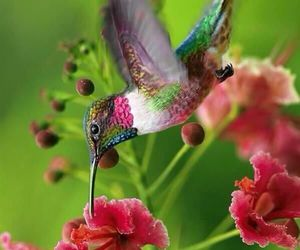 bird and flowers image
