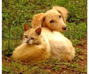 baby animals, puppy, and zut image