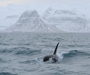 sea, whale, and nature image