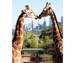 giraffe, love, and animal image