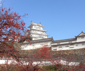castle, japan, and maple image
