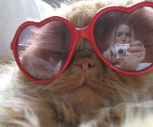 cat, girl, and persian image