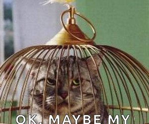 bird cage, cat, and cats image