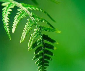 fern and green image
