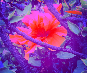 color splash, flowers, and hibiscus image