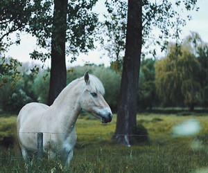 animals, clever, and horse image