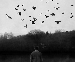 bird, boy, and black and white image