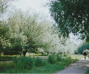 nature, green, and park image