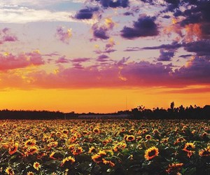 sunflowers, nature, and sky image