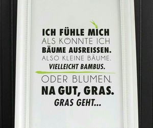 weiss, bäume, and gras image