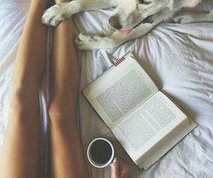 bed, dog, and legs image