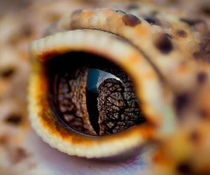 colorful, cool, and reptiles image