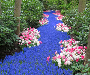 flowers and river image