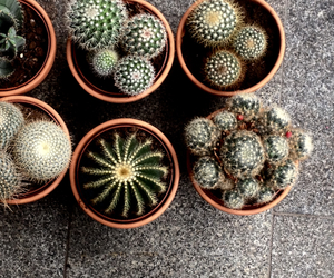 green, cactus, and dark image