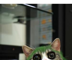 cat, batman, and joker image