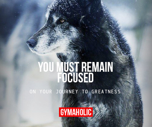 gymaholic and fitness image