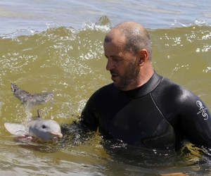 dolphin, baby, and animal image