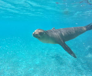 blue, galapagos, and ocean image