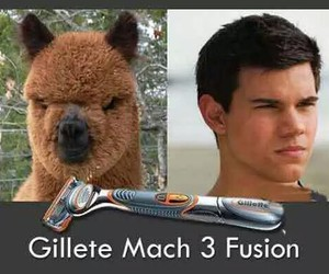 funny, Taylor Lautner, and lol image