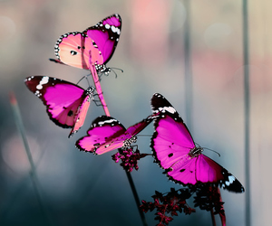 butterfly, nature, and red image