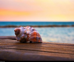 beach, summer, and 🐚 image