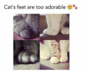 cat, feet, and cute image