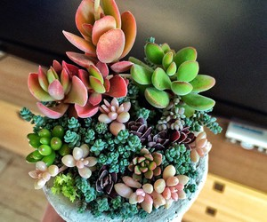 cactus, suculents, and colorful plants image