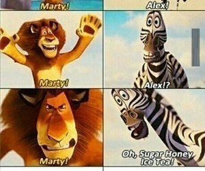 funny, madagascar, and movie image