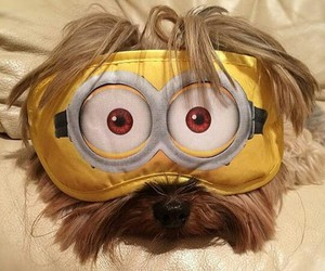minions, dog, and cute image