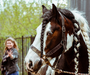 braided, horse, and lovely image