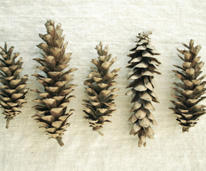 nature, pine cones, and vintage image