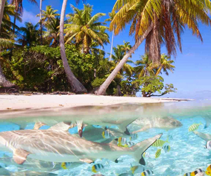 beach, Island, and sea image