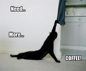coffee, cat, and funny image