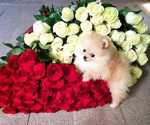 dog, flowers, and beautiful image
