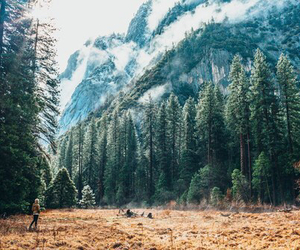forest, nature, and mountains image